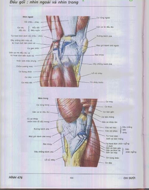 Hình ảnh sơ đồ khớp gối – Atlas giải phẫu Frank H.Netter