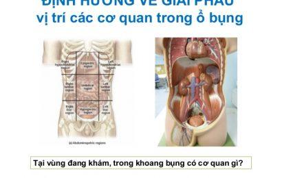Cận cảnh giải phẫu ổ bụng qua từng phần