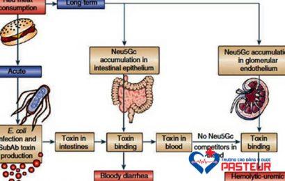 Hội chứng huyết tán tăng Ure máu và những điều cần biết