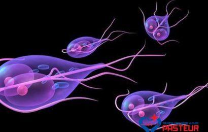 Cùng tìm hiểu về trùng roi Giardia lamblia