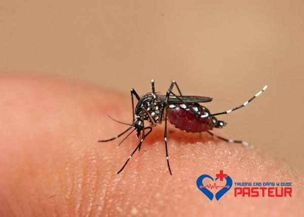 Cùng tìm hiểu về loài muỗi Anopheles