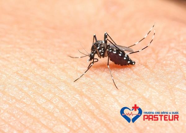 Những loài muỗi là vector truyền bệnh khác
