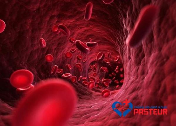 Tiểu cầu, hồng cầu, bạch cầu trong máu
