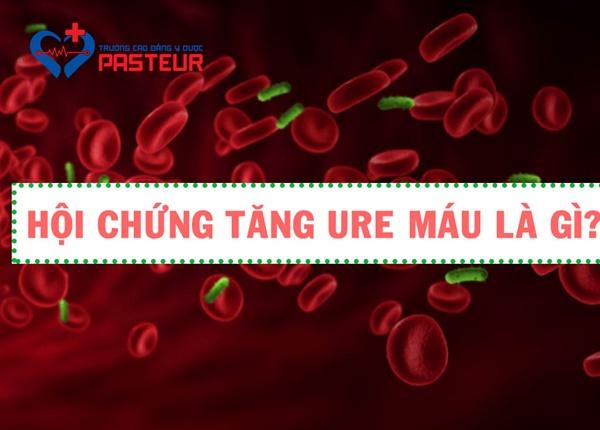 Nguyên nhân hình thành hội chứng huyết tán Ure máu (HUS)