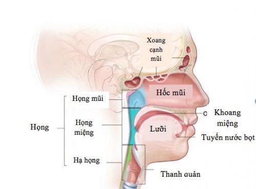 Y học lâm sàng cảnh báo những dấu hiệu nhận biết bệnh ung thư đầu cổ