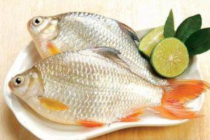 Y sĩ đa khoa tư vấn chế độ dinh dưỡng cho người bị suy nhược cơ thể từ cá diếc