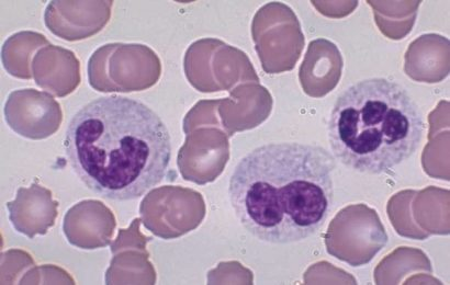 Sinh lý máu: Bạch Cầu