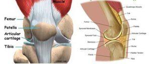 Hướng dẫn phương pháp giải phẫu khớp gối
