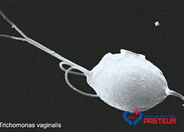 Trùng roi Trichomonas vaginalis