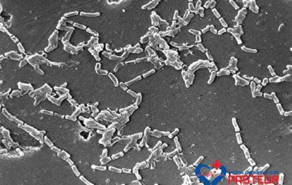 Cùng tìm hiểu về lớp nấm gây bệnh Actinomycetes